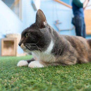 Outdoor Grass Mat For Pets